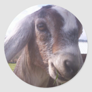 Nubian Goat Sticker