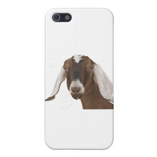 Nubian iPhone 5 Cases