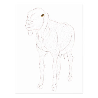 Nubian Sheep Postcard
