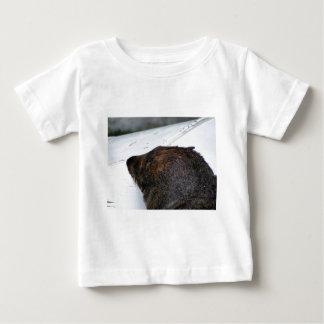 NZ Fur Seal Tee Shirts