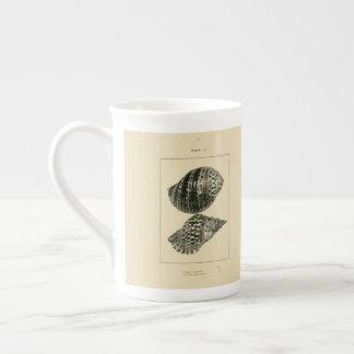 NZ Shells - Argonauta nodosa, Dolium Variegatum Tea Cup