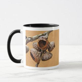 Oak Acorn Caps Mug