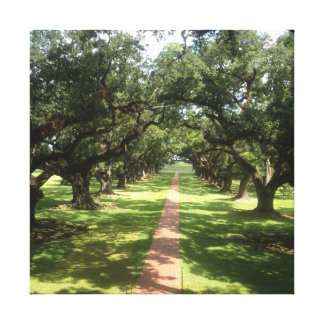 Oak Alley Plantation Canvas Wrapped Print Stretched Canvas Print