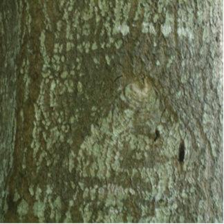Oak Bark Camo All Seeing Eye Tree Eye Standing Photo Sculpture