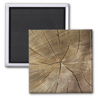 Oak Tree Cross Section Square Magnet