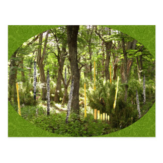 Oboe Forest Postcard