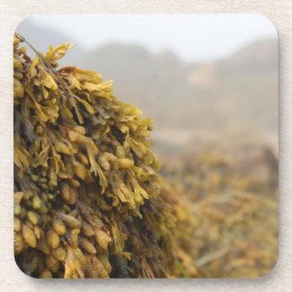 Ocean Seaweed Beverage Coaster