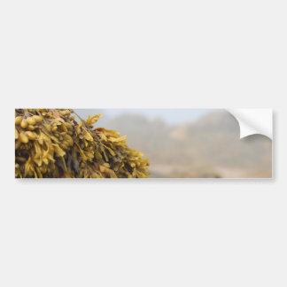 Ocean Seaweed Bumper Sticker