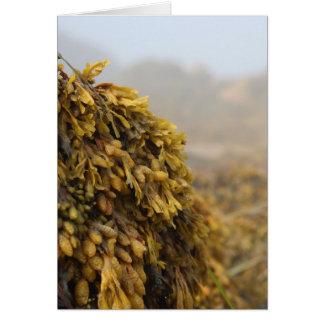Ocean Seaweed Card