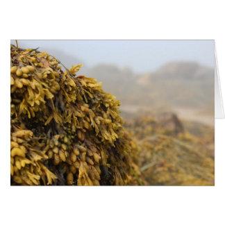 Ocean Seaweed Cards