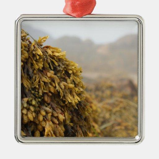 Ocean Seaweed Ornaments
