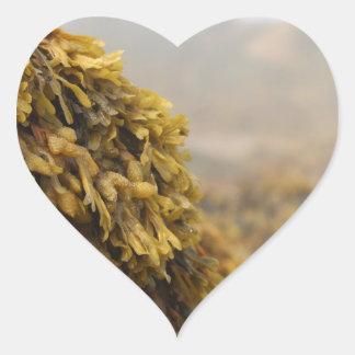 Ocean Seaweed Heart Sticker
