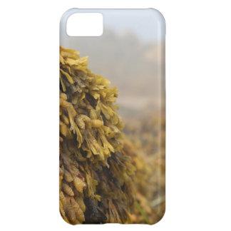 Ocean Seaweed iPhone 5C Case