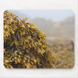 Ocean Seaweed Mouse Pad