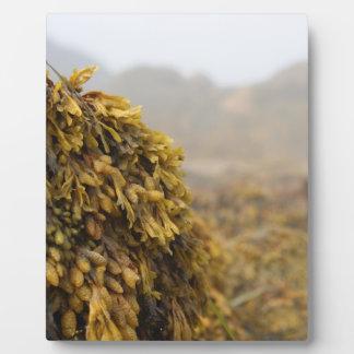 Ocean Seaweed Photo Plaques