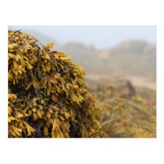 Ocean Seaweed Postcards