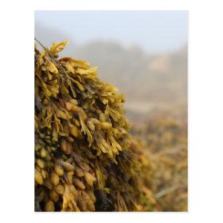 Ocean Seaweed Postcard