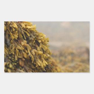 Ocean Seaweed Rectangular Sticker