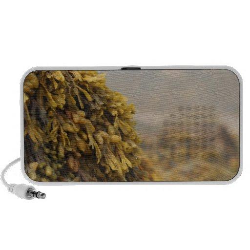 Ocean Seaweed Portable Speaker
