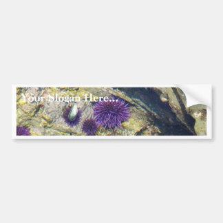 Ocean Tidepools Sea Urchins Bumper Sticker
