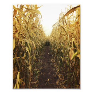 October Cornfield Maze Photograph