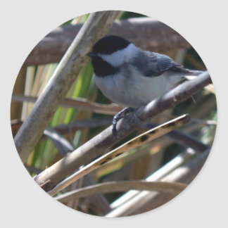 Oh My Little Chickadee Classic Round Sticker