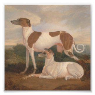 oil paintings of greyhounds photo