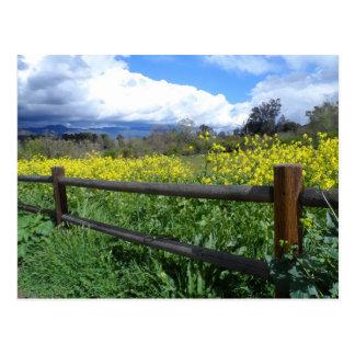 Ojai Meadows Postcard