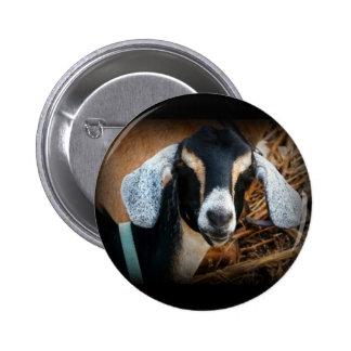 Old Goat Nubian Portrait Photo 6 Cm Round Badge