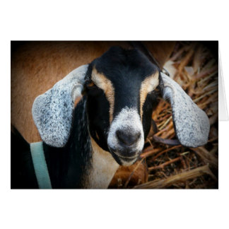 Old Goat Nubian Portrait Photo Greeting Card