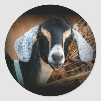Old Goat Nubian Portrait Photo Stickers