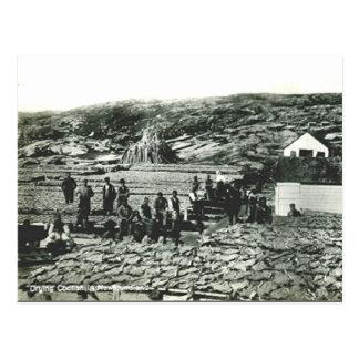 Old Postcard - Newfoundland, Drying Cod