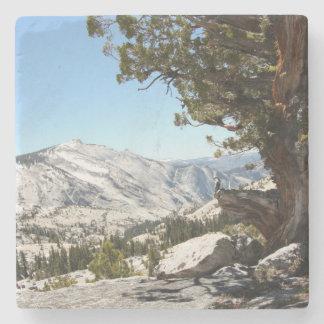 Old Tree at Yosemite National Park Stone Coaster