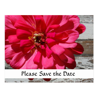 Old Wood Hot Pink Zinnia Country Save the Date Postcard