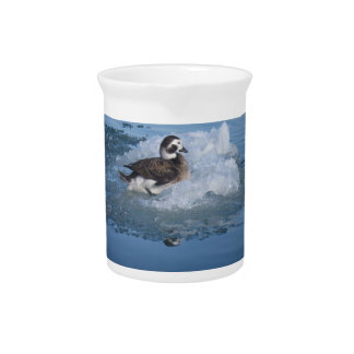 Oldsquaw Long tailed Duck on ice in the Ocean Pitcher