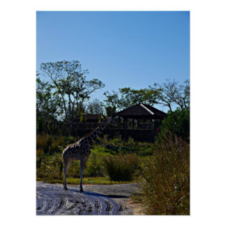 OMG! It's Giraffe Poster