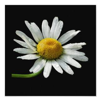 One Shasta Daisy with Raindrops 13 Cm X 13 Cm Square Invitation Card