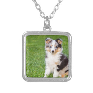 One young sheltie dog sitting on grass silver plated necklace