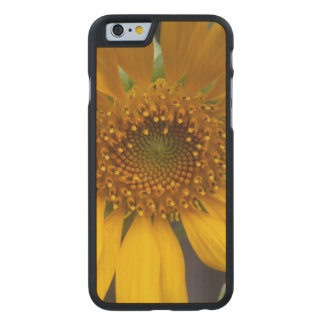 Open Sunflower Carved Maple iPhone 6 Case