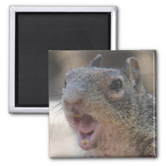 Opinionated Squirrel Magnet