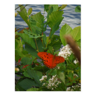 Orange and Black Butterfly at the Lake Post Cards