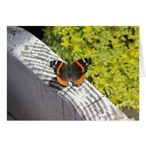 Orange and Black Butterfly Card
