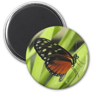 Orange and Black Butterfly Magnet