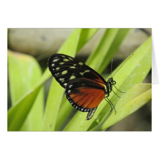 Orange and Black Butterfly on Leaf Greeting Cards
