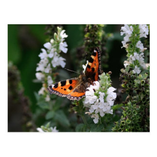 Orange and Black Butterfly on White Flowers Postcards