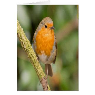 Orange and Brown Bird Card