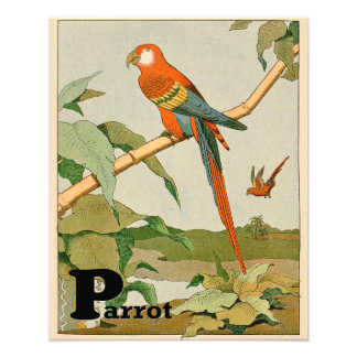 Orange and Brown Parrot Photograph