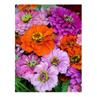 Orange and purple zinnia flowers postcard