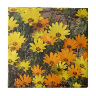 Orange and Yellow Daisies Tile