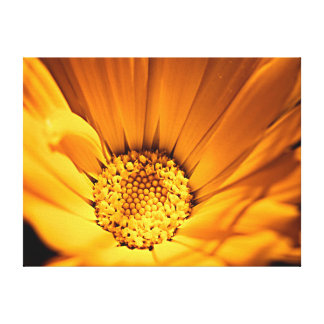 Orange and Yellow Gerbera Daisy Canvas Prints
